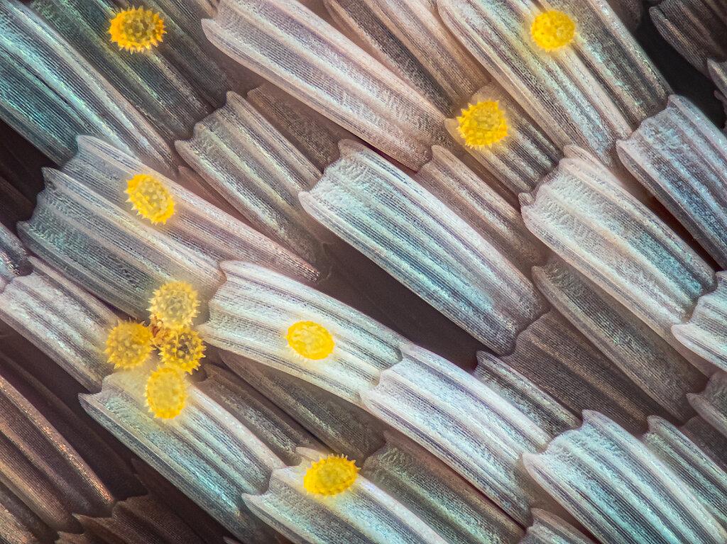 209cb-schuppen-pollen-EM-1mark2-191B-mplan40-lk1flashrf.jpg